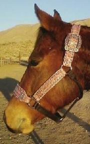 Belt Style Halter. Belt style halter in Fuschia Pink , Croc w/ Ant. Silver cross conchos and fancy spots.