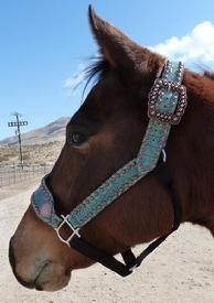 Belt style halter. Belt style halter in Ant. Turq, Croc w/ bronze square hardware and fancy spots.